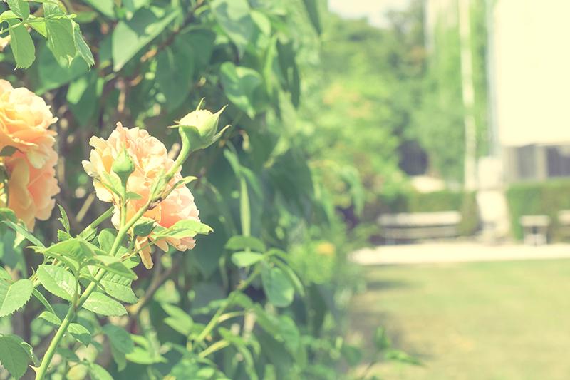fleurs-chateau-thalasseo